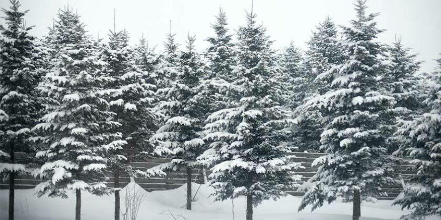 5dc26df8f67939cdf9818f6e trees